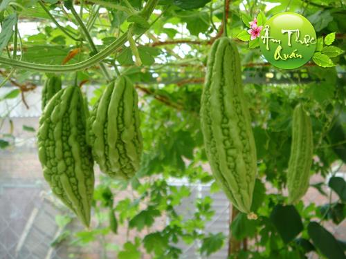Trái khổ qua - Một trong Bốn loại rau quả dưỡng tâm trong mùa hè