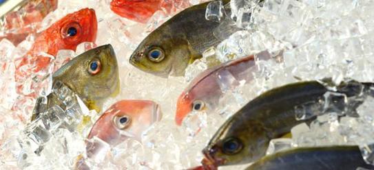Mách nhỏ cách chọn và bảo quản thực phẩm đông lạnh an toàn