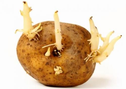 Dùng khoai tây như thế nào tốt cho sức khỏe?