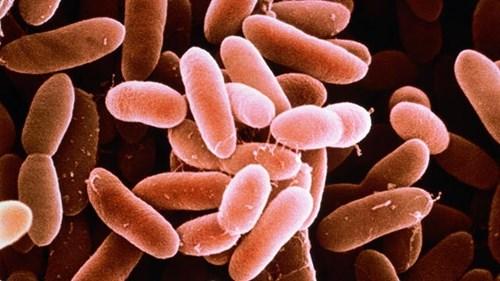 Các loại vi khuẩn có trong thực phẩm gây ngộ độc