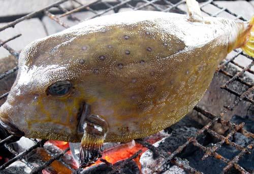 Cá bò hòm nướng Bình Thuận