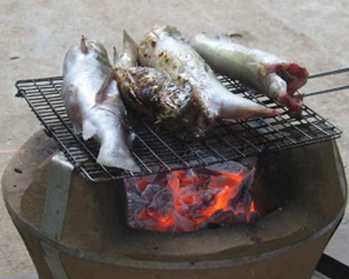 Cá chốt Gia Lai