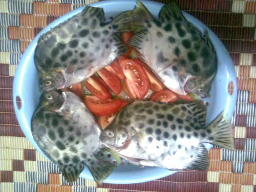 Cá nâu kho trái giác Cà Mau