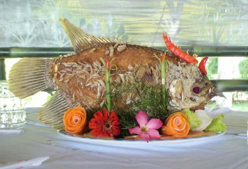 Cá tai tượng Vĩnh Long