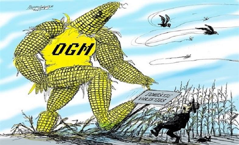 Thực trạng và các loại thực phẩm biến đổi gen GMO tại Việt Nam