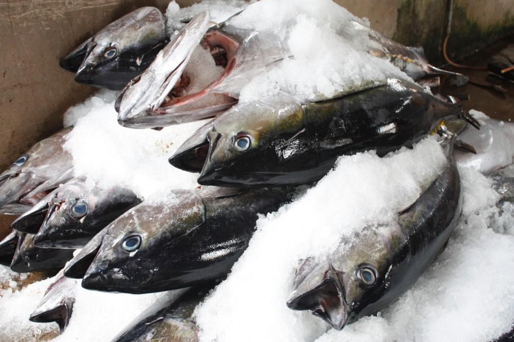 Bà nội trợ đã biết cách lựa chọn hải sản tươi sạch cho bữa ăn ngon?