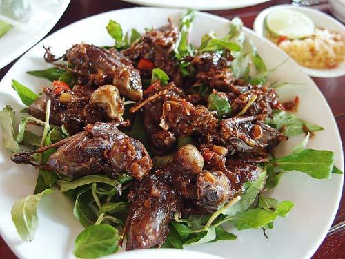 Chim mía Phú Phong Bình Định