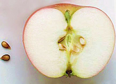 Những bộ phận chứa độc trên rau củ bạn nên tránh