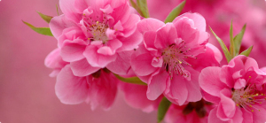 Bí quyết cắm hoa tươi lâu hơn