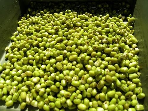 Lợi ích sức khỏe từ đậu xanh