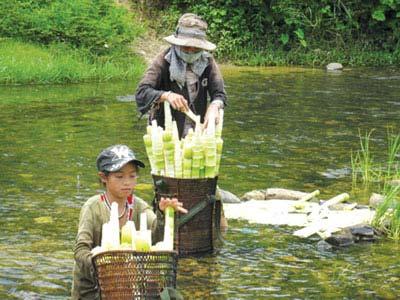 Măng Le Đắk Lắk