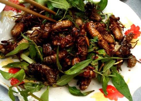 Món ngon từ ve sầu Vĩnh Long