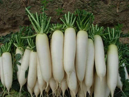 Ngạc nhiên với những lợi ích tuyệt vời của các loại củ cải
