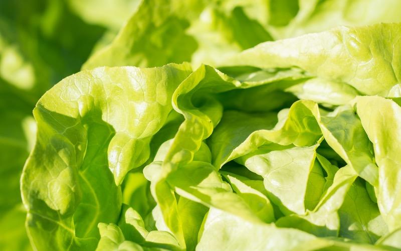 Hướng dẫn phân biệt rau hữu cơ khác rau an toàn cho các bà nội trợ