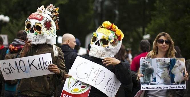 Tác hại tiềm ẩn của thực phẩm biến đổi gen GMO