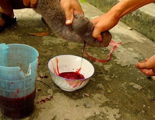Thịt chuột La Chí Hà Giang