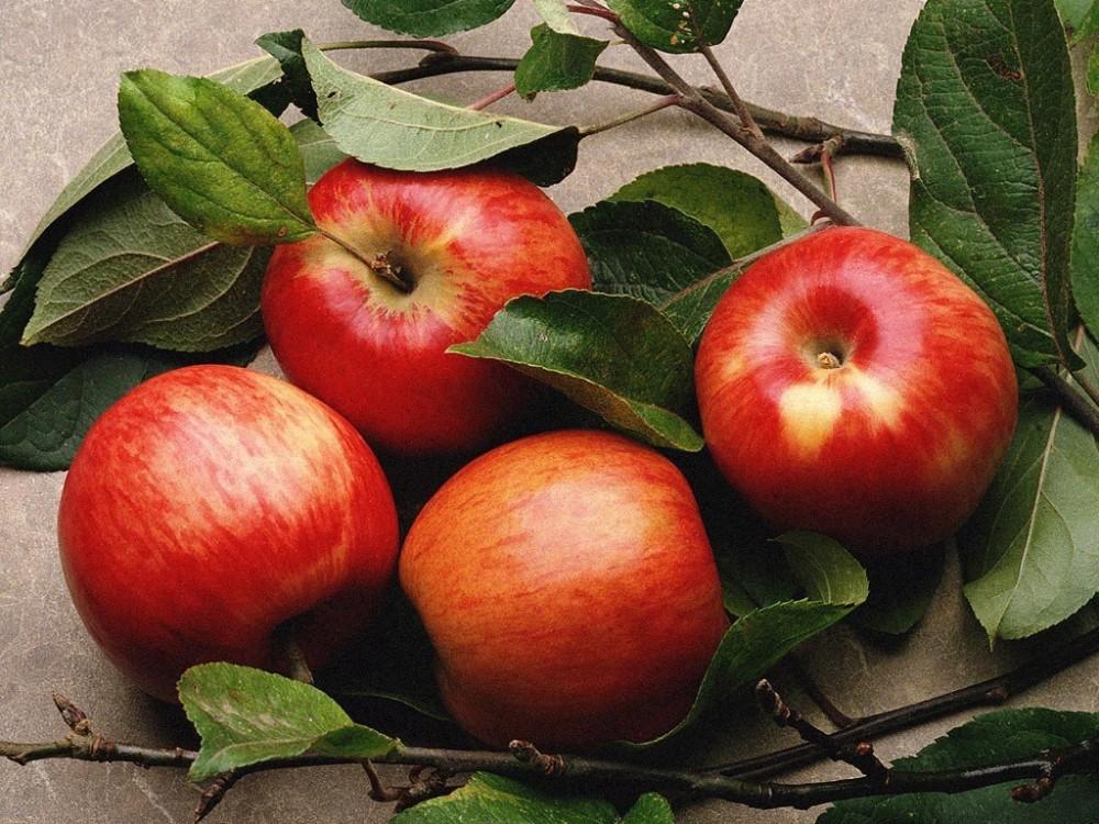 Điểm danh 7 loại trái cây ăn dặm cho bé từ 7 tháng tuổi mẹ nên biết