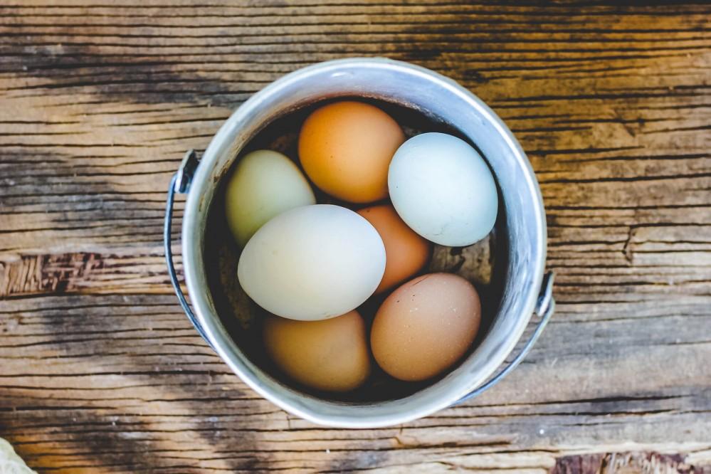 Trứng gà và trứng vịt, trứng nào tốt hơn?