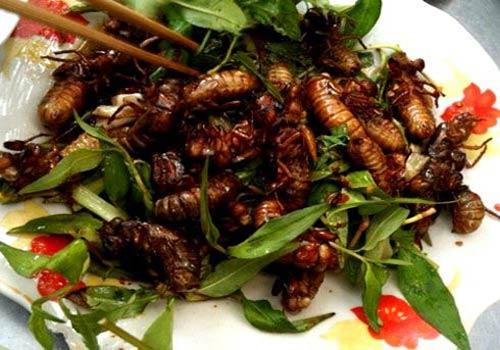 Món ăn ngon từ côn trùng Việt Nam
